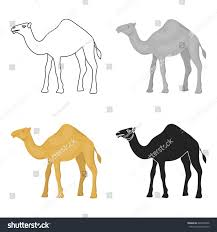 camel icon cartoon style isolated on stock vector 626420936