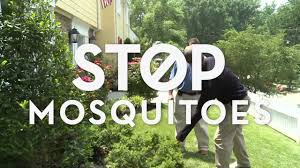 best way to stop mosquitoes youtube