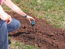 how to plant blackberries how tos diy
