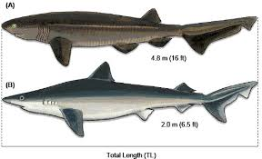 codes of conduct shark encounters