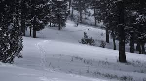 cold winter days in montana big sky country outdoor montanans