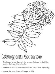 oregon grape coloring page
