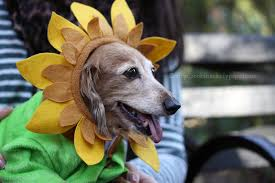 Halloween Dog Costume Nyc U0027s Halloween Dog Costume Parade Crafty Crookshanks