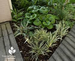 Shady Garden Ideas Palms Shade Design Wow Central Gardener