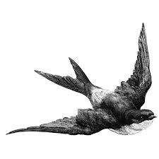 Barn Swallow Tattoo Designs Flying Barn Swallows Tattoos