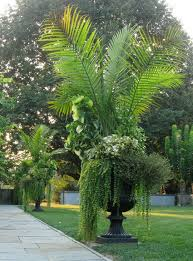 Tropical Potted Plants Outdoor - nice potted sago palm presentation landscape and garden in