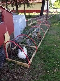 Building Backyard Chicken Coop Build A Diy Chicken Tunnel In Your Backyard U2013 Homedesigninspired
