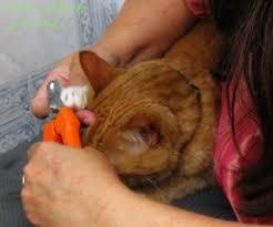 pet grooming the good the bad u0026 the furry tuesday u0027s tip 28