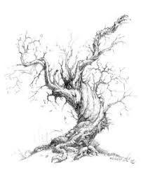 vintage tree drawing trees pinterest tree sketches sketches