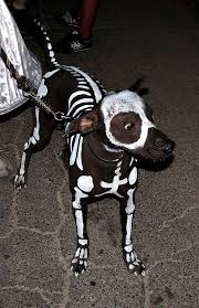 Halloween Costume Skeleton 134 Halloween Pet Costumes Images Animal