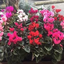 florist wilmington nc lou s flower world 25 photos florists 5128 oleander dr