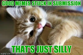 Silly Cat Memes - that s just silly cat memes imgflip
