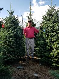 christmas kelly tree farm christmas farms near me evergreen