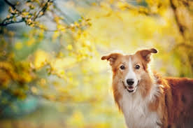 featured resource thanksgiving pet safety dogville daycare