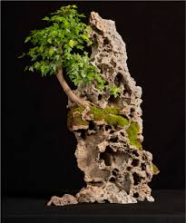 acer on rock decor piatra pinterest acer bonsai and plants