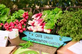 Urban Vegetable Garden by Urban Demonstration Garden Capital Area Food Bank U2013 Washington