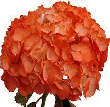 wholesale hydrangeas cheap orange flowers for weddings orange hydrangea flower buy