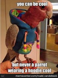 Hoodie Meme - parrot wearing a hoodie by roald vandebeek meme center