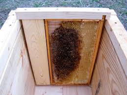 How To Build Top Bar Hive Natural Beekeeping Horizontal Hives Do It Yourself Plans