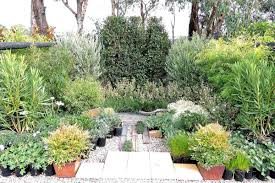 australian native screening plants coastal selections great plants for your seaside garden