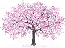 pink cherry blossom tree stock vector more images of