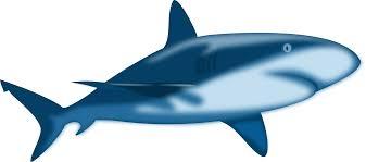 film kartun ikan hiu animasi hiu cliparts co