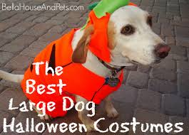 dog clothes for halloween the best large dog halloween costumes