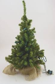 tabletop tree real boxwood treestabletop
