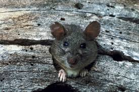 All Living Things Luxury Rat Pet Home by Do Sound Repellent Devices Really Keep Rodents Away Home Guides