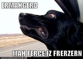 Ermahgerd Animal Memes - jack road face ermahgerd know your meme