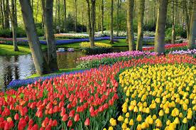 flower gardens world u0027s largest flower garden keukenhof tulip gardens amsterdam