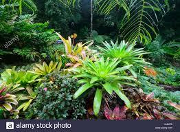 Tropical Plants Perth Tropical Garden Australia Stock Photos U0026 Tropical Garden Australia