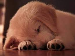 free puppy dog wallpaper android apps on google play