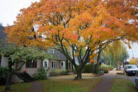 Fall Cleanup Landscaping by Fall Cleanup Services By Memphis Landscape