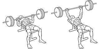Bench Press Vs Dumbbell Press Biomechanics Of The Bench Press Article Ptonthenet