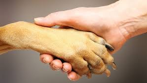 boxer dog feet 18 things you didn u0027t know about dog paws mnn mother nature network