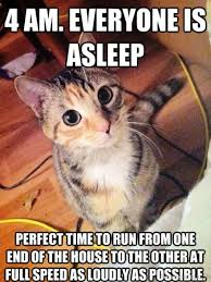 Silly Cat Memes - 2 cute cat meme