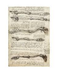 Leonardo Da Vinci Human Anatomy Drawings Da Vinci Human Anatomy Drawings