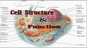 Ear Anatomy And Function Anatomy Cell Structure Gallery Learn Human Anatomy Image