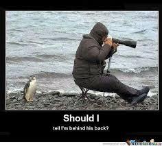 Funny Penguin Memes - troller penguin by exw psixologika meme center
