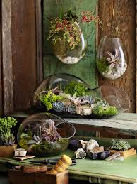 plants cactus terrarium inspiringmyart u2022