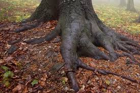 advanced search the tree guide at arborday org