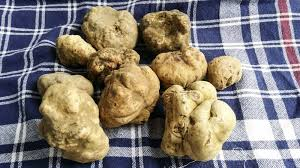 where can you buy truffles how to start your own truffle farm bloomberg