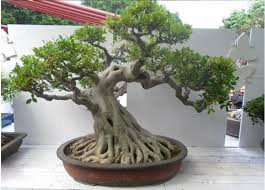 bonsai artificial air bonsai table small plant pots artificial