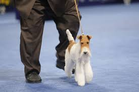 who won the dog show on thanksgiving what to watch on tv thanksgiving weekend