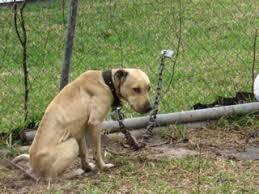 Dog In The Backyard by The Life Of A Backyard Dog U2013 Alafair