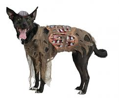 cerberus 3 headed dog spirit halloween freddy krueger picture halloween costumes for pets abc news
