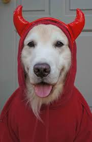 this is a cute devil golden retrievers in costume pinterest