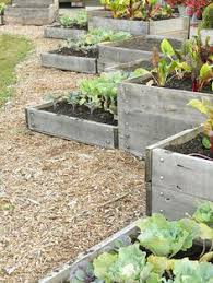 Vegetable Garden Bed Design by How To Make A Raised Bed Garden Veggies Yards And Gardens