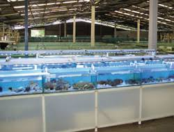 international waters sequestration hits u s ornamental fish